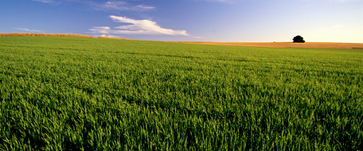 (14.09.2015) $4 Billion Farming Investment: Government White Paper